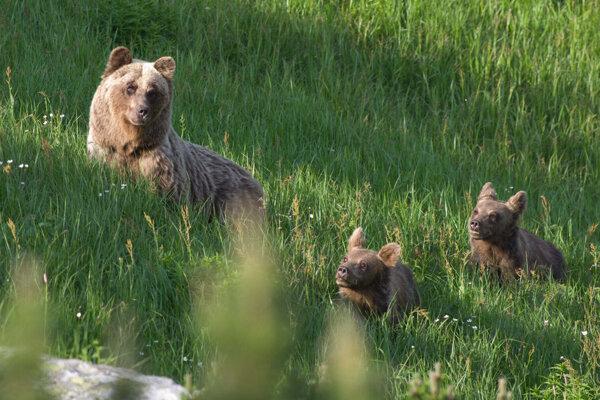 Medvedica s mladými.