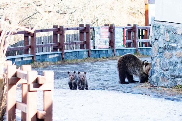 Medvedicu s dvomi mláďatami zachytil skúsený fotograf na Hrebienku.