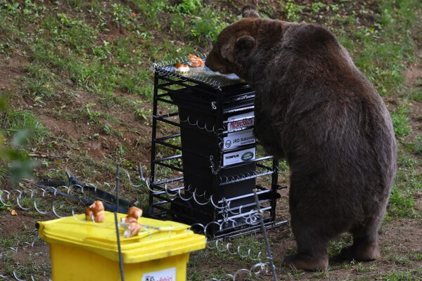 Ku kontajneru v železnej klietke sa medveď nedostal.