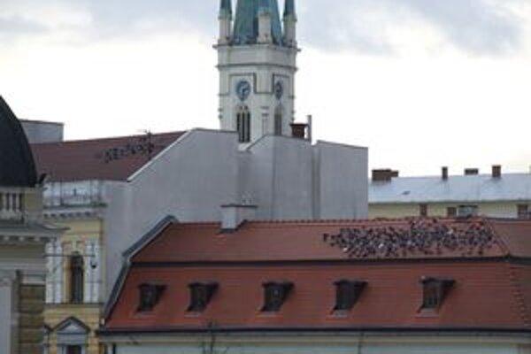 Holuby sú v Nitre premnožené, najviac ich je v centre.
