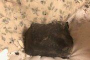 Meteorit v posteli Kanaďanky.