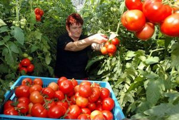 Pestovanie rajčín a inej zeleniny zažije pri Šali boom.