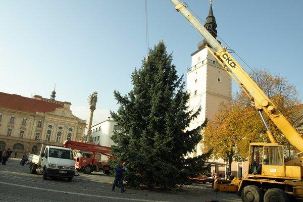 Vianočný strom darovali mesto zo Špačiniec.