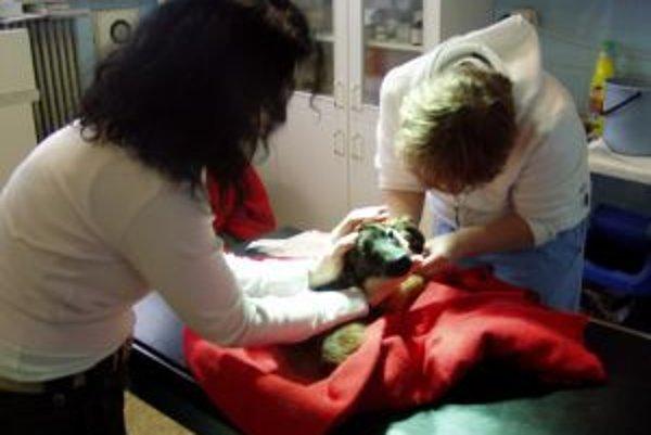 Ingrid Nováková (vľavo) absolvuje s opustenými zvieratami aj veterinárne vyšetrenia.