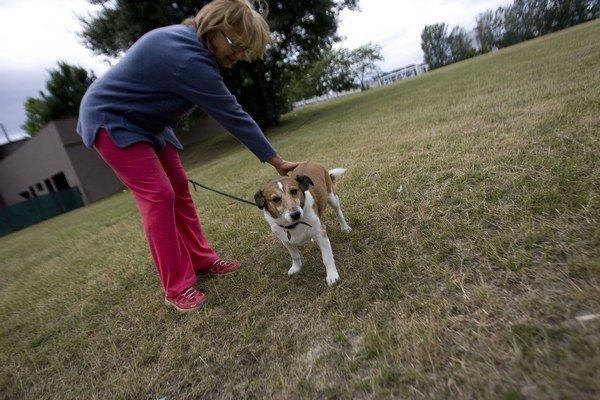 Na prechádzke V Trenčíne je voľný pohyb psov dovolený takmer všade.