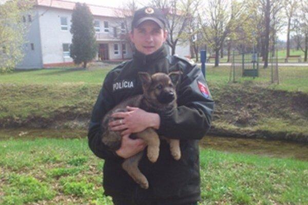 Pri hľadaní drog pomáhajú policajtom aj vycvičené psy.