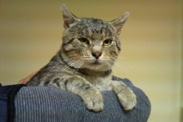 Na výstave Svet zvierat budú aj mačky.