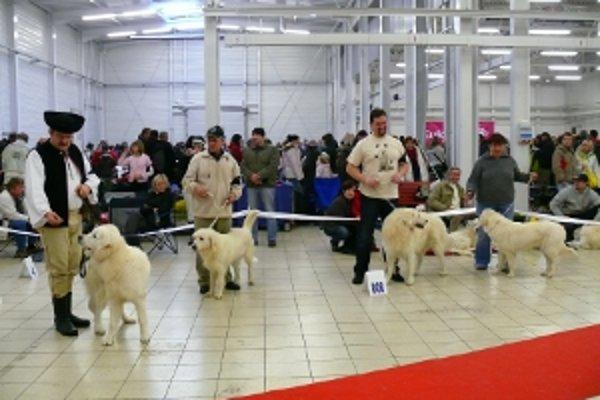 Výstava psov sa uskutoční v Trenčíne 28. a 29. januára.