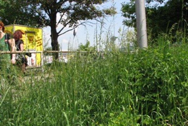 Neupravenú zeleň v meste musia pokosiť dobrovoľníci