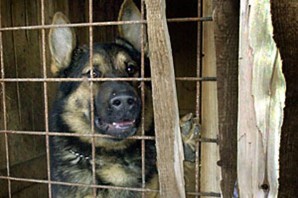 V Trenčíne viackrát zaútočili na ľudí pustené strážne psy.