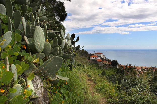 Madeira je pre stále kvitnúce rastliny tiež prezývaná ako ostrovy večnej jari.