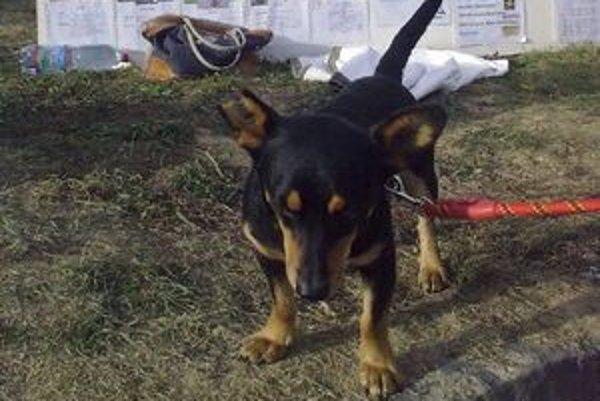 Opusteným psom vyzbieranými matracmi a dekami vystelú pelechy.