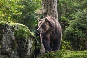 Na medvede treba čakať aj hodiny.