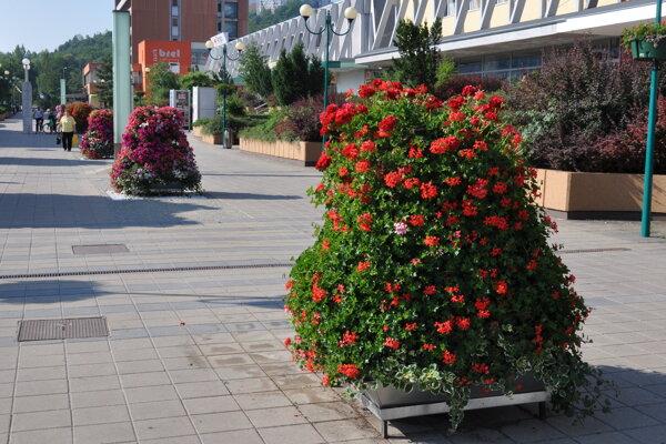 Do centra mesta čoskoro vrátia kvetinové pyramídy.