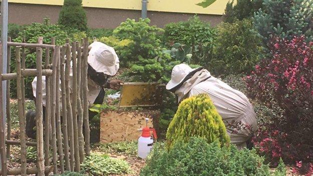 Včelí roj mohol byť pre tunajších školákov nebezpečný