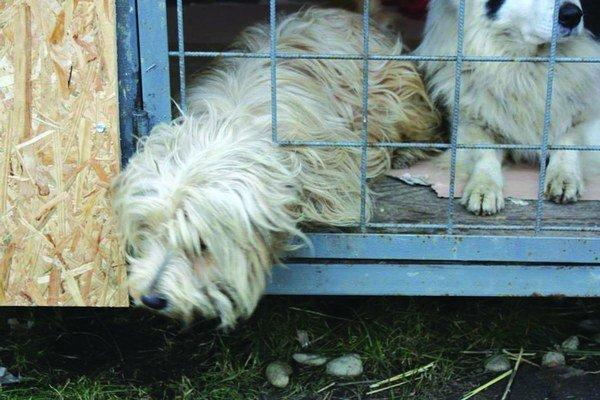 Ľudia si na adopciu najčastejšie vyberajú šteniatka.