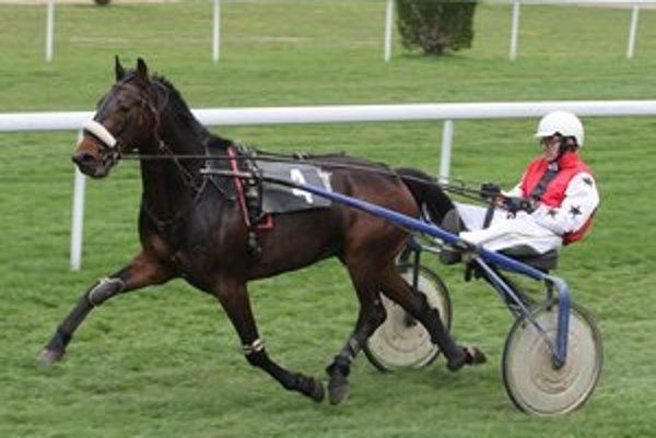 Ewals (am. Peter Zmeko, Trotting Stars).