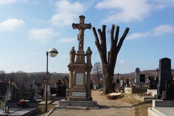 Jedna z poškodených líp na cintoríne v Štefanove.