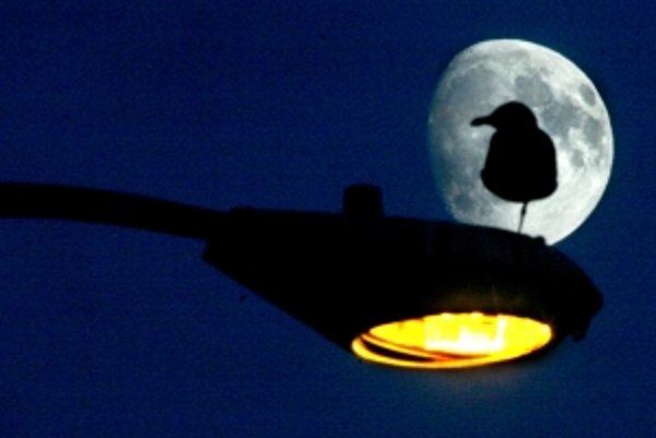Modernizácia osvetlenia nebude.