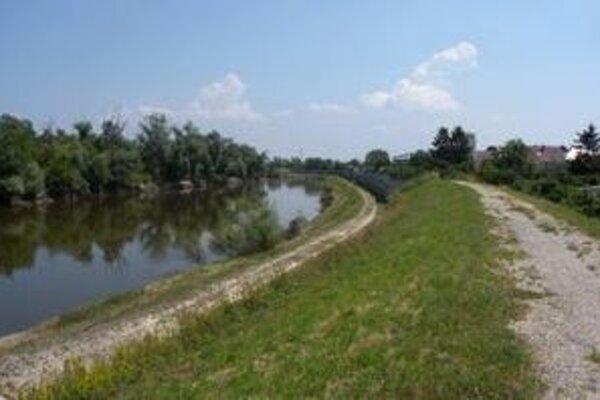 Rozvodnená rieka Morava zanechala po sebe vysychajúce mláky, ktoré sa stali semeniskom komárov.