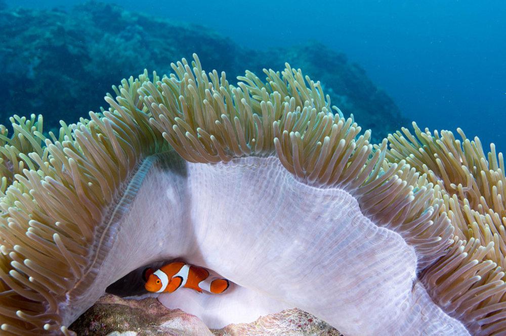 Koralové záhrady v okolí Raja Ampat sú domovom pestrofarebných rýb.