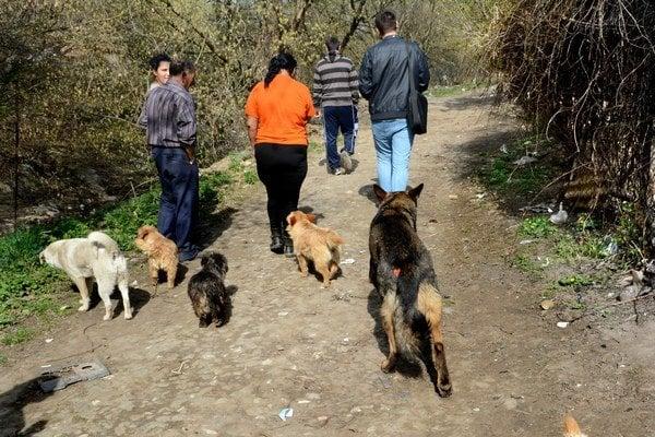 Od svojich pánov sa nepohli ani na krok. Pustené psy podľa miestnych slúžia na odháňanie premnožených potkanov.