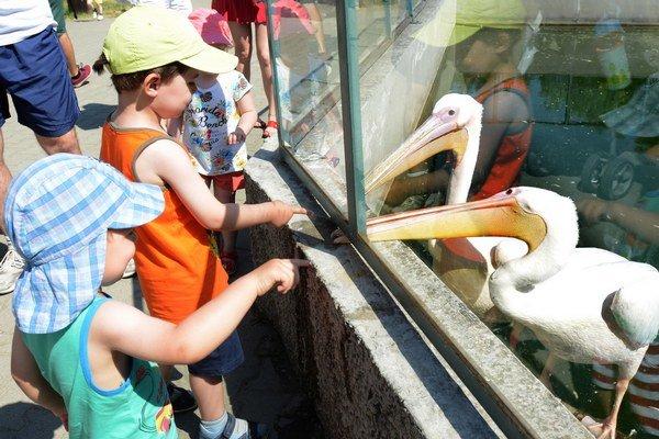 Pokec s pelikánmi. Vtáky s typickým zobákom deti zabavili.