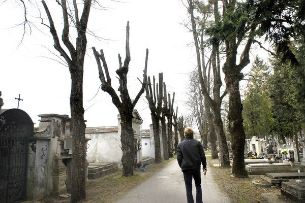 Stromy na cintoríne. Takéto orezanie ich má omladiť.