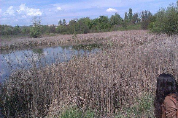 Jazierko nad Popradskou. Miestni ho nazývajú Pľuvátko. Vzniklo po ťažení hliny.