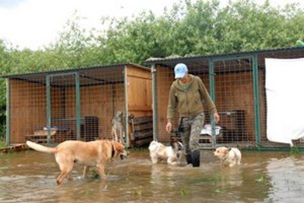 Útulok pre zvieratá zaplavila voda.