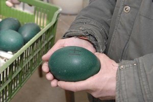 Zelené vajcia. Ošetrovatelia ich musia chrániť pred zamrznutím.