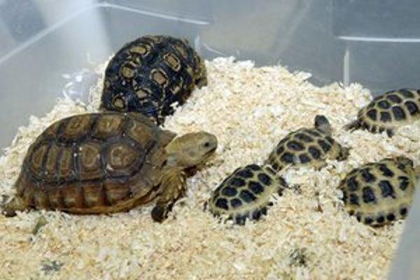 Na výstave nechýbali ani korytnačky.