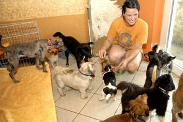 Psia spoločnosť. Vo zvieracom hoteli nie je pes osamelý.