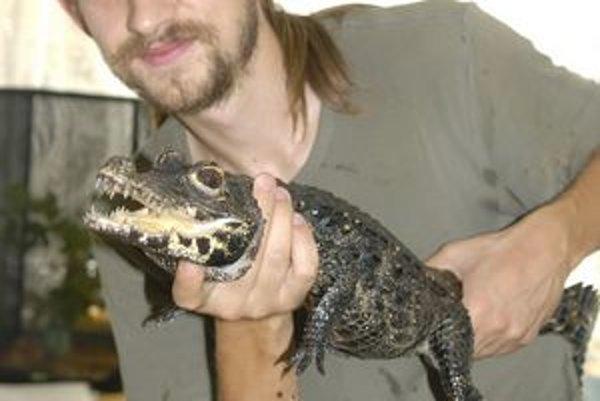 Krokodíla sa nebojí vziať takto na ruky.