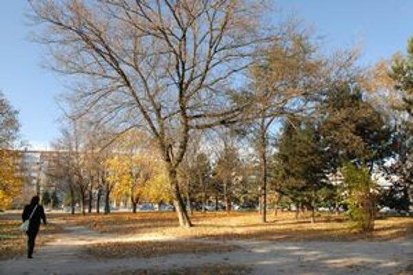 Ohrozený parčík? Obyvatelia sa boja rúbania stromov pri frekventovanej križovatke.
