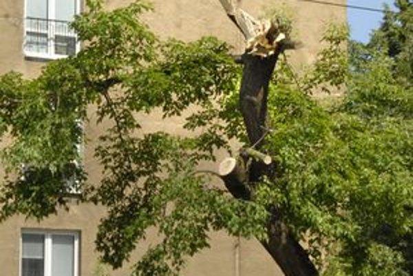 Hlinkova. Na Hlinkovej spadol strom priamo na trolejové vedenie.