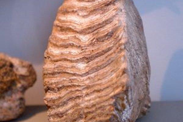 Zub z mamuta je v košickom múzeu.