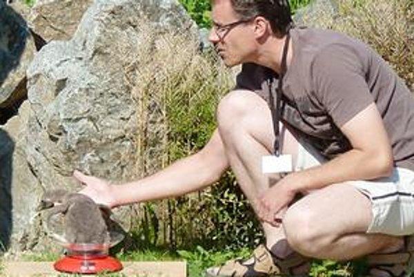 Najväčší miláčik. Novonarodený tučniačik sa má k svetu. Gramy pribúdajú každým dňom. Včera dosiahol hmotnosť 1 247 gramov.
