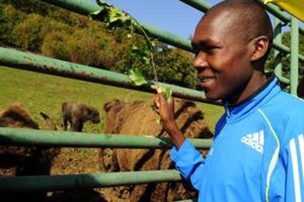 Krstiny v zoo. Mláďa zubra európskeho pokrstil maratónsky bežec z Kene Elisha Tarus Meli bukovou vetvičkou.
