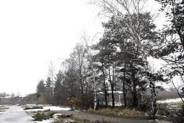 Stromy na výrub. Netvoria súvislý porast, ale lemujú najmä obvod areálu schátraného štadióna.