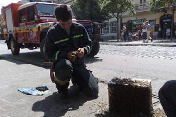 Včielky zachránili hasiči s pomocou včelára.