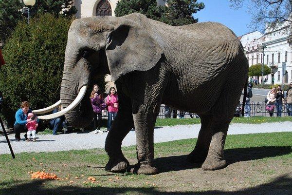 Slon v mestskom parku.