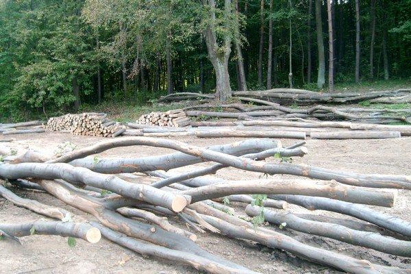 Mestské lesy. Neplánovane musia vyťažiť a predať tisíc kubíkov dreva.