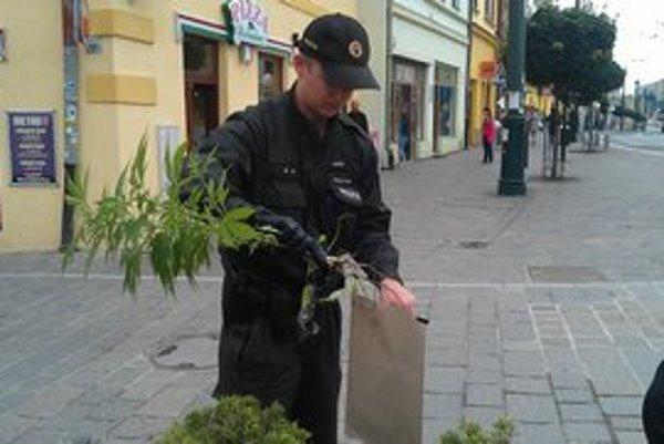 Rastlinu zlikvidovala polícia.