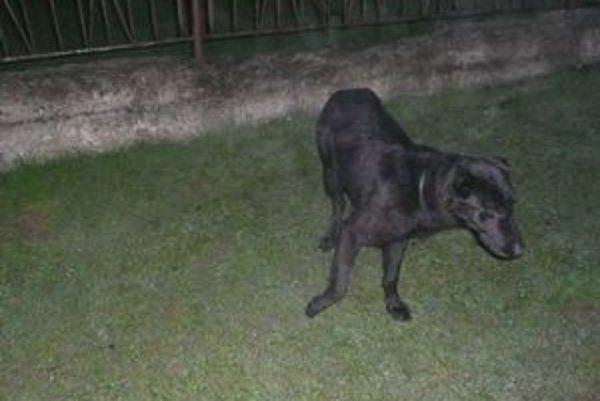 Túlavý pes v Beloveži. Nikto si ho nechce vziať na svoju zodpovednosť.