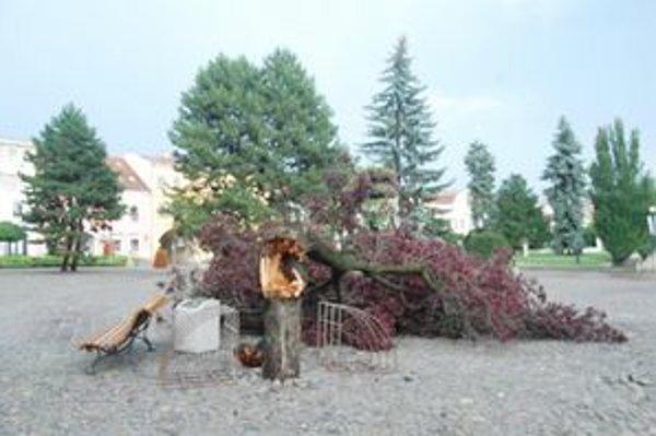 Skolený strom. Čoskoro vysadia nový.