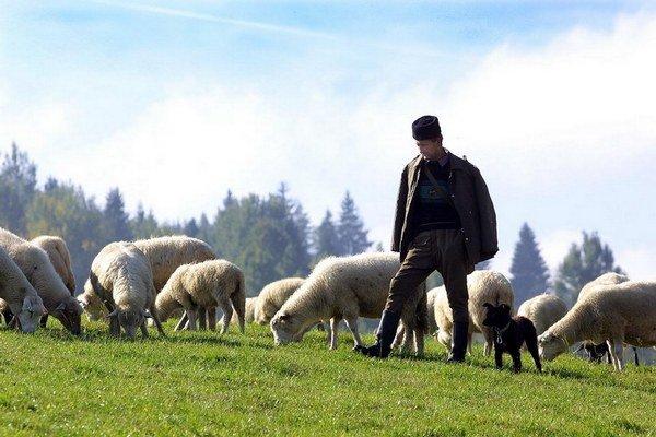Ministerstvo školstva chce u nás viac chovateľov oviec.