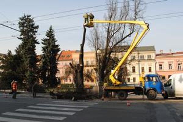 Tridsiaty marec. Strom začali rúbať v predposledný deň dovoleného výrubu.