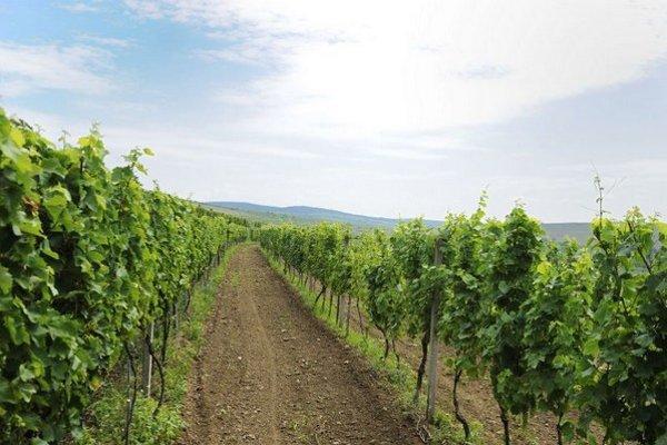 Tokajská vinárska oblasť je známa kvalitnými vínami.