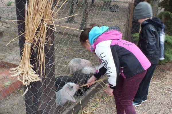 Školáci obdivovali každého živého tvora. Zaujali ich mláďatá vietnamských prasiat.